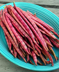 Top Pick Pinkeye Cowpea seeds