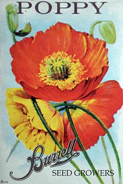 Heirloom Iceland Poppy Seeds