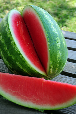 Premier Seedless Watermelon Seeds