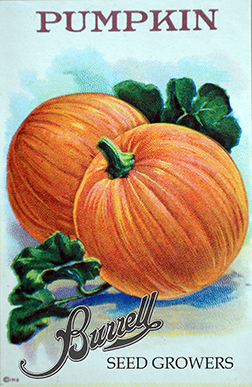Pumpkin, sugar