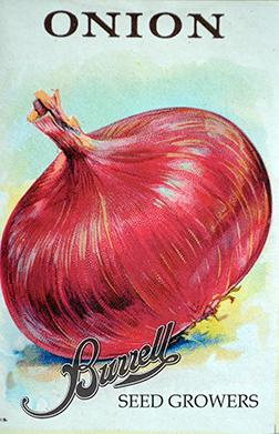Heirloom Red Onion Seeds