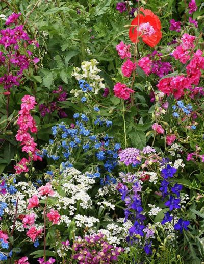 Shade Wildflower Mix Seeds