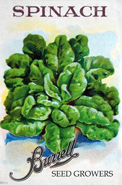 Spinach 4