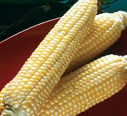 Sugar Buns Sweet Corn