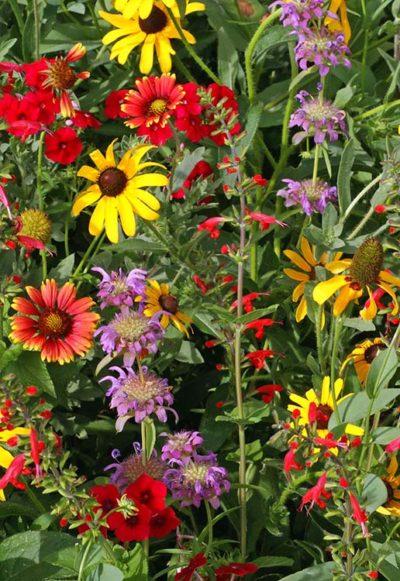 Texas Oklahoma Wildflower Mix Seeds