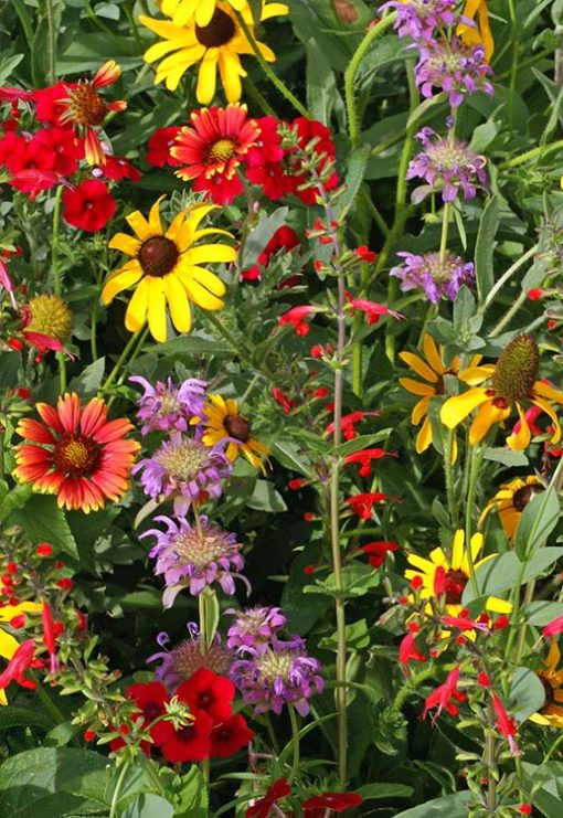 Texas Oklahoma Wildflower Mix Seeds