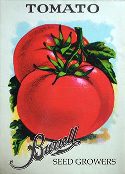 Antique Heirloom Tomato Seeds