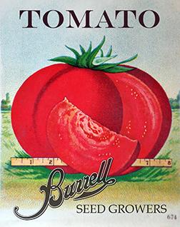 Antique Heirloom Beefsteak Tomato Seeds