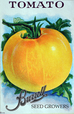 Carolina Gold Tomato Seeds