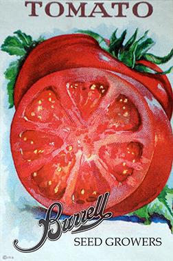 Tomato Pkt