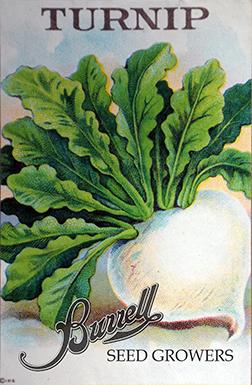 Turnip Shogin