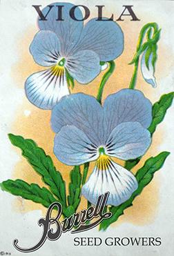 Heirloom Viola Seeds