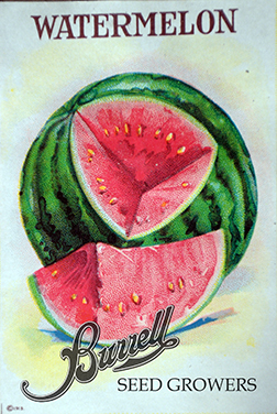 Heirloom Watermelon Seeds