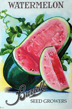 Heirloom Watermelon Seeds
