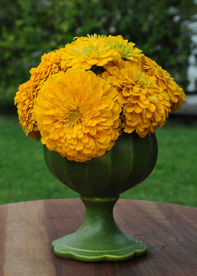 Daffodil California Giant Zinnia Seeds