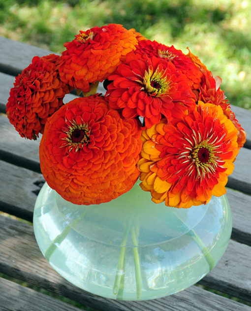 California Giant Orange King Zinnia Seeds