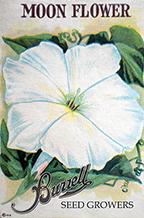 Flowers, Miscellaneous M-Z