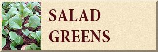 Salad Greens Seed