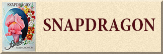Snapdragon Seeds