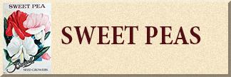 Sweet Pea Seeds