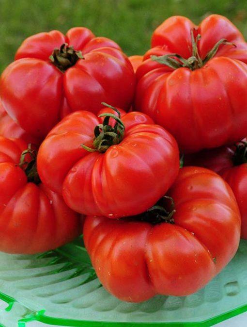 Ruffino's Favorite Tomato Seeds