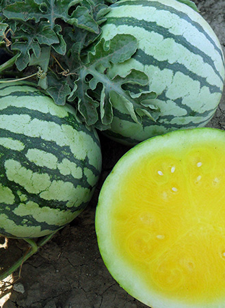 Gold-n-Sweet Watermelon Seeds