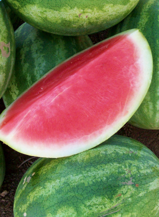 Premont Watermelon Seeds