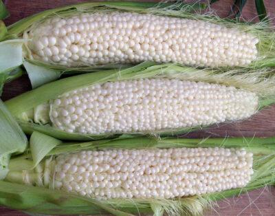 Country Gentleman Sweet Corn.