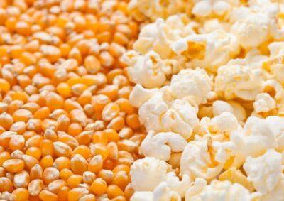 Mushroom Popcorn